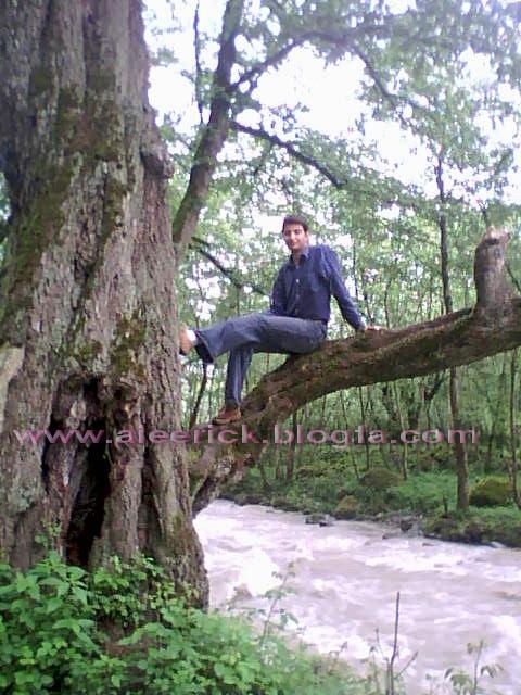 جنگل 2000
